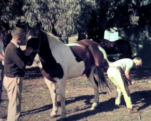 Sandy Sutherland, farrier, shoeing a horse as a learner