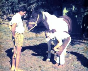 Sandy Sutherland, farrier shoeing a horse as a young man